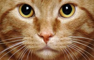 پتریزو | فروشگاه اینترنتی گربه|آرایشگاه حیوانات|بهترین فروشگاه گربه|فروش گربه -های-گربه-300x191 آموزش ها و مقالات