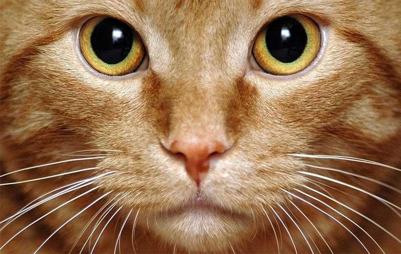 پتریزو | فروشگاه اینترنتی گربه|آرایشگاه حیوانات|بهترین فروشگاه گربه|فروش گربه -های-گربه آموزش ها و مقالات