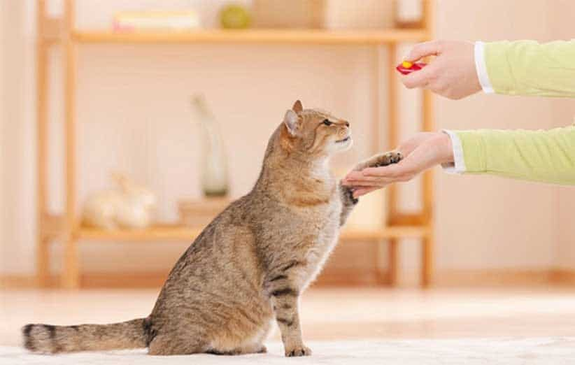پتریزو | فروشگاه اینترنتی گربه|آرایشگاه حیوانات|بهترین فروشگاه گربه|فروش گربه -اول-گربه-در-خانه آموزش ها و مقالات
