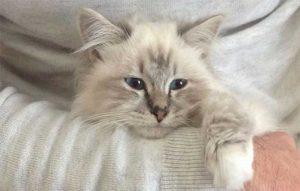 پتریزو | فروشگاه اینترنتی گربه|آرایشگاه حیوانات|بهترین فروشگاه گربه|فروش گربه صدای-پچ-پج-گربه-300x191 صفحه اصلی    فروش گربه