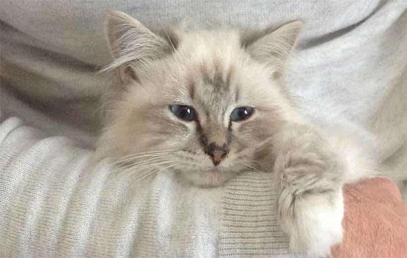 پتریزو | فروشگاه اینترنتی گربه|آرایشگاه حیوانات|بهترین فروشگاه گربه|فروش گربه -پچ-پج-گربه صدای پچ پج گربه گربه نگهداری و آشنایی با گربه ها صدای پچ پج گربه