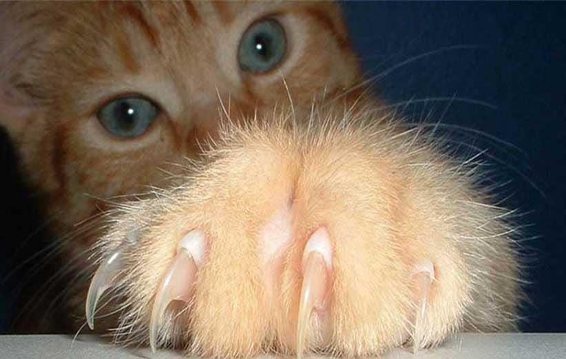 پتریزو | فروشگاه اینترنتی گربه|آرایشگاه حیوانات|بهترین فروشگاه گربه|فروش گربه طریقه-ناخن-گرفتن-گربه-ها آموزش ها و مقالات    فروش گربه