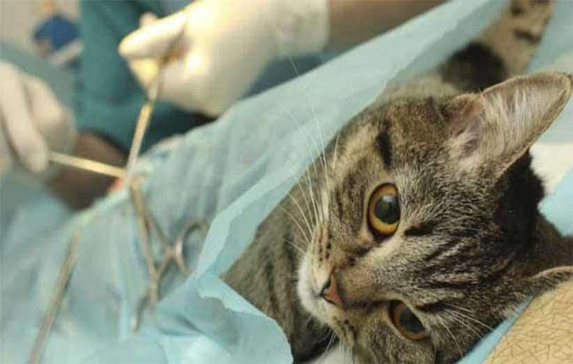پتریزو | فروشگاه اینترنتی گربه|آرایشگاه حیوانات|بهترین فروشگاه گربه|فروش گربه -سازی-گربه-ها آموزش ها و مقالات