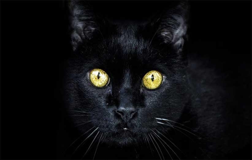 پتریزو | فروشگاه اینترنتی گربه|آرایشگاه حیوانات|بهترین فروشگاه گربه|فروش گربه -روشنایی-برای-گربهها شانه زدن موی گربه بلاگ