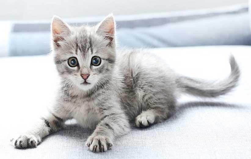 پتریزو | فروشگاه اینترنتی گربه|آرایشگاه حیوانات|بهترین فروشگاه گربه|فروش گربه چه-بچه-گربهای-را-انتخاب-کنم؟ آموزش ها و مقالات    فروش گربه
