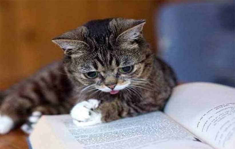 پتریزو   فروشگاه اینترنتی گربه آرایشگاه حیوانات بهترین فروشگاه گربه فروش گربه گربه-مایکا آموزش ها و مقالات    فروش گربه