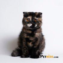 پتریزو | فروشگاه اینترنتی گربه|آرایشگاه حیوانات|بهترین فروشگاه گربه|فروش گربه WhatsApp-Image-2019-11-05-at-17.39.29-210x210 صفحه اصلی    فروش گربه