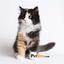 پتریزو | فروشگاه اینترنتی گربه|آرایشگاه حیوانات|بهترین فروشگاه گربه|فروش گربه WhatsApp-Image-2019-11-05-at-17.42.07-210x210 صفحه اصلی    فروش گربه