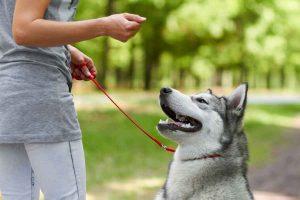 پتریزو | فروشگاه اینترنتی گربه|آرایشگاه حیوانات|بهترین فروشگاه گربه|فروش گربه Look-command-Dog-300x200 آموزش عقب رفتن به سگ آموزش سگ ها ارایشگاه سگ راهنمای نژاد های سگ ها نگهداری و آشنایی با سگ ها سگهای نگهبان تربیت سگ آموزش عقب رفتن به سگ آموزش سگ