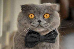 پتریزو | فروشگاه اینترنتی گربه|آرایشگاه حیوانات|بهترین فروشگاه گربه|فروش گربه 100-300x200 مشخصات و نگهداری گربه اسکاتیش فولد ارایشگاه حیوانات ارایشگاه گربه تغذیه و رژیم غذایی گربه ها راهنمای نژاد های گربه ها سلامتی و بهداشت گربه ها گربه نظافت نظافت حیوانات خانگی نگهداری و آشنایی با گربه ها گربه اسکاتیش قیمت گربه اسکاتیش فولد گربه اسکاتیش سفید گربه اسکاتیش بلو گربه اسکاتیش آنفولد گربه اسكاتيش