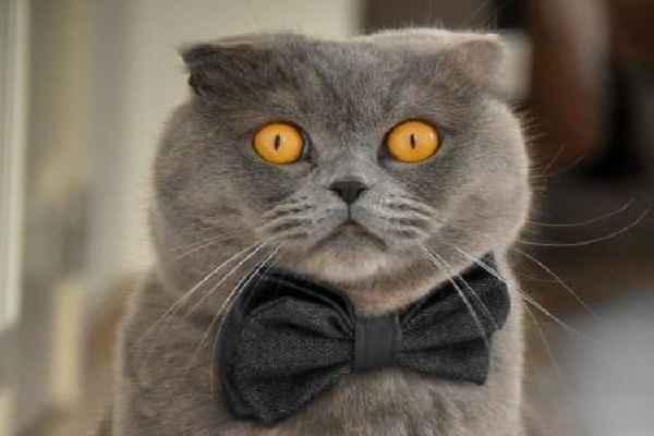 پتریزو | فروشگاه اینترنتی گربه|آرایشگاه حیوانات|بهترین فروشگاه گربه|فروش گربه 100 آموزش ها و مقالات