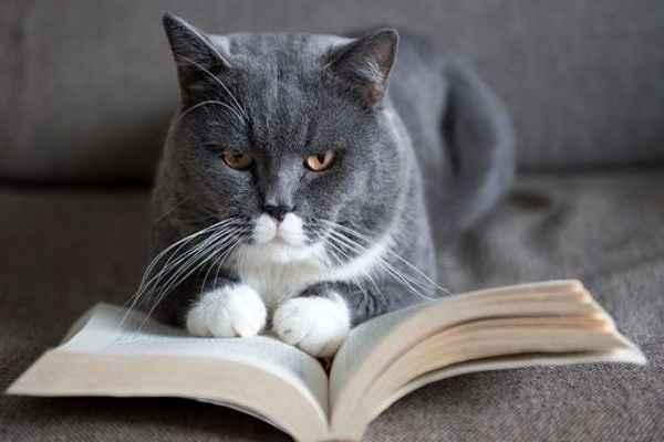 پتریزو | فروشگاه اینترنتی گربه|آرایشگاه حیوانات|بهترین فروشگاه گربه|فروش گربه 101 آموزش ها و مقالات
