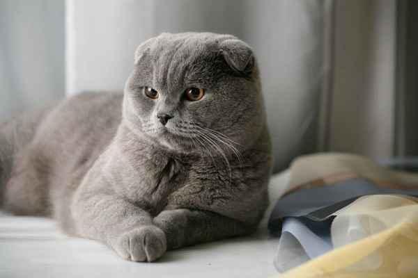 پتریزو | فروشگاه اینترنتی گربه|آرایشگاه حیوانات|بهترین فروشگاه گربه|فروش گربه 105 آموزش ها و مقالات