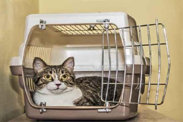پتریزو | فروشگاه اینترنتی گربه|آرایشگاه حیوانات|بهترین فروشگاه گربه|فروش گربه 108-1 آموزش ها و مقالات