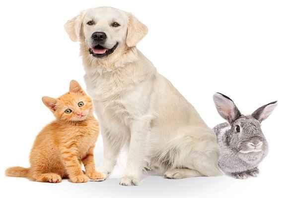 پتریزو | فروشگاه اینترنتی گربه|آرایشگاه حیوانات|بهترین فروشگاه گربه|فروش گربه 112-1 آموزش ها و مقالات