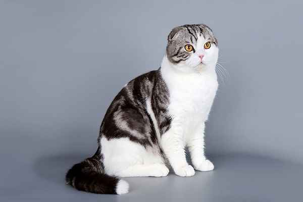 پتریزو | فروشگاه اینترنتی گربه|آرایشگاه حیوانات|بهترین فروشگاه گربه|فروش گربه 114-1 آموزش ها و مقالات