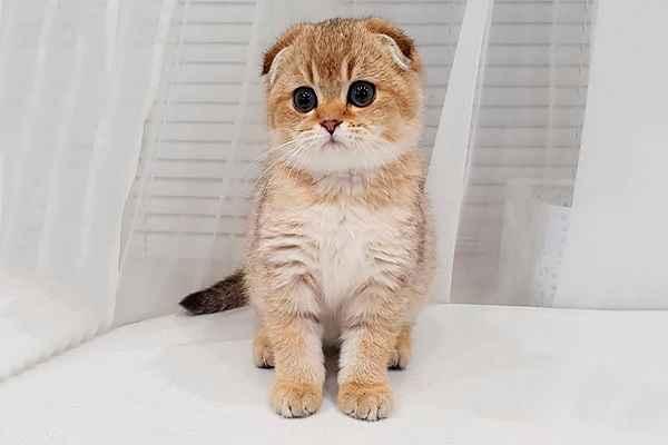 پتریزو | فروشگاه اینترنتی گربه|آرایشگاه حیوانات|بهترین فروشگاه گربه|فروش گربه 115 آموزش ها و مقالات