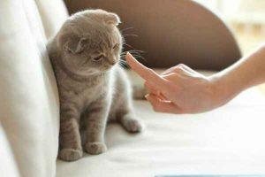 پتریزو | فروشگاه اینترنتی گربه|آرایشگاه حیوانات|بهترین فروشگاه گربه|فروش گربه -گربه-300x200 تنبیه گربه آموزش گربه ها راهنمای نژاد های گربه ها گربه نگهداری و آشنایی با گربه ها نحوه تنبیه گربه روش تنبیه گربه تنبیه گربه ها تنبیه گربه پرشین تنبیه بچه گربه تنبيه گربه