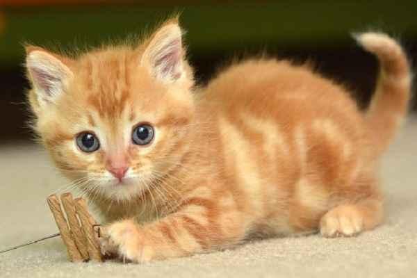 پتریزو | فروشگاه اینترنتی گربه|آرایشگاه حیوانات|بهترین فروشگاه گربه|فروش گربه -گربه-چقدر-است آموزش ها و مقالات