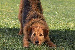پتریزو | فروشگاه اینترنتی گربه|آرایشگاه حیوانات|بهترین فروشگاه گربه|فروش گربه -رفتاری-سگ-ها-300x200 آشنایی با رفتارهای مختلف سگ آموزش سگ ها راهنمای نژاد های سگ ها سلامتی و بهداشت سگ ها نگهداری و آشنایی با سگ ها حالت های مختلف سگ حالت های سگ ها حالت های دم سگ حالت های بدن سگ