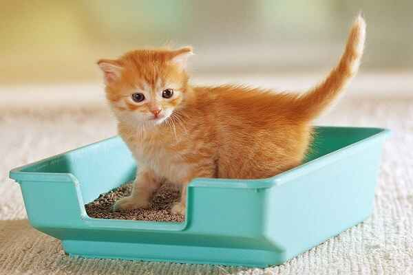 پتریزو | فروشگاه اینترنتی گربه|آرایشگاه حیوانات|بهترین فروشگاه گربه|فروش گربه -گربه آموزش ها و مقالات