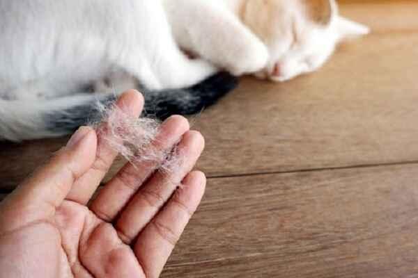 پتریزو | فروشگاه اینترنتی گربه|آرایشگاه حیوانات|بهترین فروشگاه گربه|فروش گربه -مو-گربه آموزش ها و مقالات