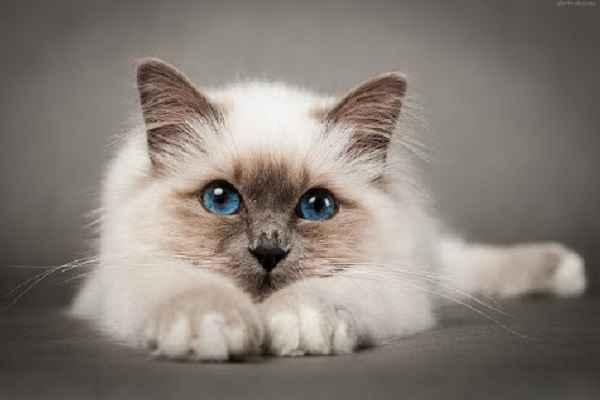 پتریزو | فروشگاه اینترنتی گربه|آرایشگاه حیوانات|بهترین فروشگاه گربه|فروش گربه -بیرمن آموزش ها و مقالات