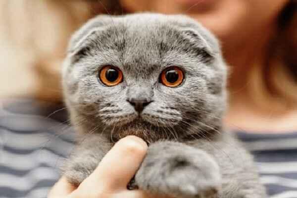 پتریزو | فروشگاه اینترنتی گربه|آرایشگاه حیوانات|بهترین فروشگاه گربه|فروش گربه -فولد آموزش ها و مقالات