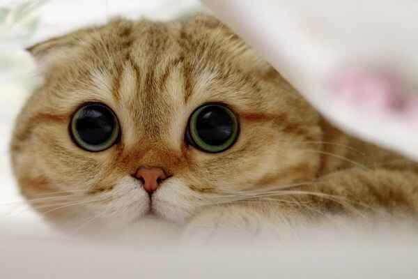 پتریزو | فروشگاه اینترنتی گربه|آرایشگاه حیوانات|بهترین فروشگاه گربه|فروش گربه آموزش ها و مقالات