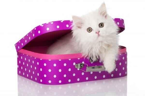 پتریزو | فروشگاه اینترنتی گربه|آرایشگاه حیوانات|بهترین فروشگاه گربه|فروش گربه -فنجانی آموزش ها و مقالات