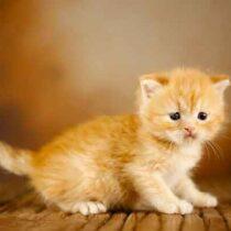 پتریزو | فروشگاه اینترنتی گربه|آرایشگاه حیوانات|بهترین فروشگاه گربه|فروش گربه Screenshot_20210205-163928_Instagram-210x210 صفحه اصلی