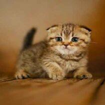 پتریزو | فروشگاه اینترنتی گربه|آرایشگاه حیوانات|بهترین فروشگاه گربه|فروش گربه Screenshot_20210205-230756_Instagram-210x210 صفحه اصلی