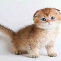 پتریزو | فروشگاه اینترنتی گربه|آرایشگاه حیوانات|بهترین فروشگاه گربه|فروش گربه Screenshot_20210207-211953_Instagram-210x210 صفحه اصلی