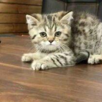 پتریزو | فروشگاه اینترنتی گربه|آرایشگاه حیوانات|بهترین فروشگاه گربه|فروش گربه Screenshot_20210207-215542_Instagram-210x210 صفحه اصلی