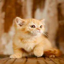 پتریزو | فروشگاه اینترنتی گربه|آرایشگاه حیوانات|بهترین فروشگاه گربه|فروش گربه Screenshot_20210215-101332_Instagram-210x210 صفحه اصلی