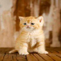 پتریزو | فروشگاه اینترنتی گربه|آرایشگاه حیوانات|بهترین فروشگاه گربه|فروش گربه Screenshot_20210215-101401_Instagram-210x210 صفحه اصلی
