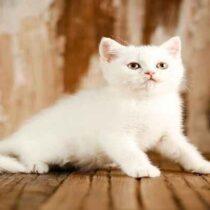 پتریزو | فروشگاه اینترنتی گربه|آرایشگاه حیوانات|بهترین فروشگاه گربه|فروش گربه Screenshot_20210215-101404_Instagram-210x210 صفحه اصلی