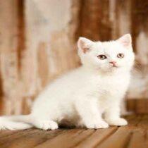 پتریزو | فروشگاه اینترنتی گربه|آرایشگاه حیوانات|بهترین فروشگاه گربه|فروش گربه Screenshot_20210215-101408_Instagram-210x210 صفحه اصلی