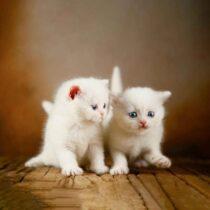 پتریزو | فروشگاه اینترنتی گربه|آرایشگاه حیوانات|بهترین فروشگاه گربه|فروش گربه WhatsApp-Image-2021-04-08-at-19.25.50-210x210 صفحه اصلی