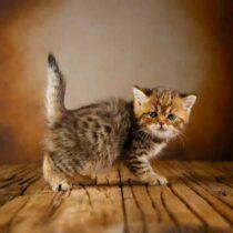 پتریزو | فروشگاه اینترنتی گربه|آرایشگاه حیوانات|بهترین فروشگاه گربه|فروش گربه WhatsApp-Image-2021-04-08-at-19.25.55-1-210x210 صفحه اصلی