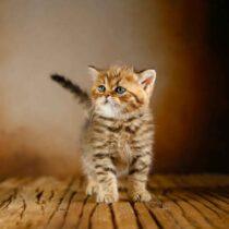پتریزو | فروشگاه اینترنتی گربه|آرایشگاه حیوانات|بهترین فروشگاه گربه|فروش گربه WhatsApp-Image-2021-04-08-at-19.25.55-210x210 صفحه اصلی