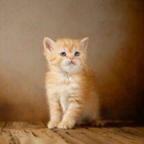 پتریزو | فروشگاه اینترنتی گربه|آرایشگاه حیوانات|بهترین فروشگاه گربه|فروش گربه WhatsApp-Image-2021-04-08-at-19.26.27-1-210x210 صفحه اصلی