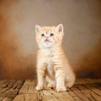 پتریزو | فروشگاه اینترنتی گربه|آرایشگاه حیوانات|بهترین فروشگاه گربه|فروش گربه WhatsApp-Image-2021-04-08-at-19.26.27-210x210 صفحه اصلی