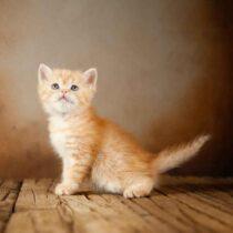 پتریزو | فروشگاه اینترنتی گربه|آرایشگاه حیوانات|بهترین فروشگاه گربه|فروش گربه WhatsApp-Image-2021-04-08-at-19.26.29-1-210x210 صفحه اصلی