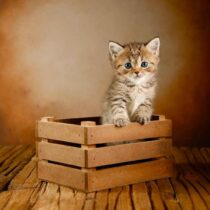 پتریزو | فروشگاه اینترنتی گربه|آرایشگاه حیوانات|بهترین فروشگاه گربه|فروش گربه WhatsApp-Image-2021-04-08-at-19.26.29-210x210 صفحه اصلی