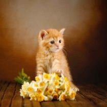 پتریزو | فروشگاه اینترنتی گربه|آرایشگاه حیوانات|بهترین فروشگاه گربه|فروش گربه WhatsApp-Image-2021-04-08-at-19.43.54-210x210 صفحه اصلی