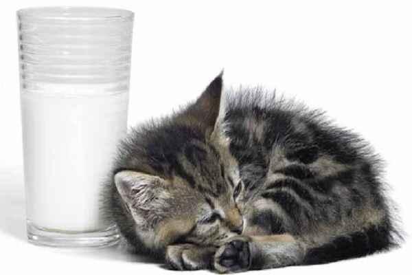 پتریزو | فروشگاه اینترنتی گربه|آرایشگاه حیوانات|بهترین فروشگاه گربه|فروش گربه -بچه-گربه-می-توواند-شیر-گاو-بنوشد آموزش ها و مقالات