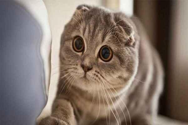 پتریزو | فروشگاه اینترنتی گربه|آرایشگاه حیوانات|بهترین فروشگاه گربه|فروش گربه -های-گربه-اسکاتیش آموزش ها و مقالات
