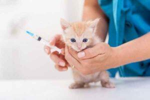 پتریزو | فروشگاه اینترنتی گربه|آرایشگاه حیوانات|بهترین فروشگاه گربه|فروش گربه -عضلانی-به-گربه-300x200 تزریق عضلانی به گربه سلامتی و بهداشت گربه ها گربه نگهداری و آشنایی با گربه ها زمان تزریق واکسن ها روش تزریق انسولین تزریق عضلانی به گربه تزریق انسولین به گربه تزریق انسولین تزریق امپول به گربه