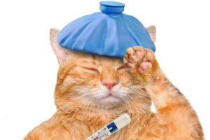 پتریزو | فروشگاه اینترنتی گربه|آرایشگاه حیوانات|بهترین فروشگاه گربه|فروش گربه -ابریزش-بینی-گربه-300x200 ابریزش بینی گربه سلامتی و بهداشت گربه ها گربه نظافت نگهداری و آشنایی با گربه ها گواهی سلامت گربه سلامتی و بهداشت گربه سلامت گربه ها بهداشت گربه ها نگهداری گربه ها تمیز کردن گربه ها نظافت حیوانات خانگی بیماری گربه ابریزش بینی گربه